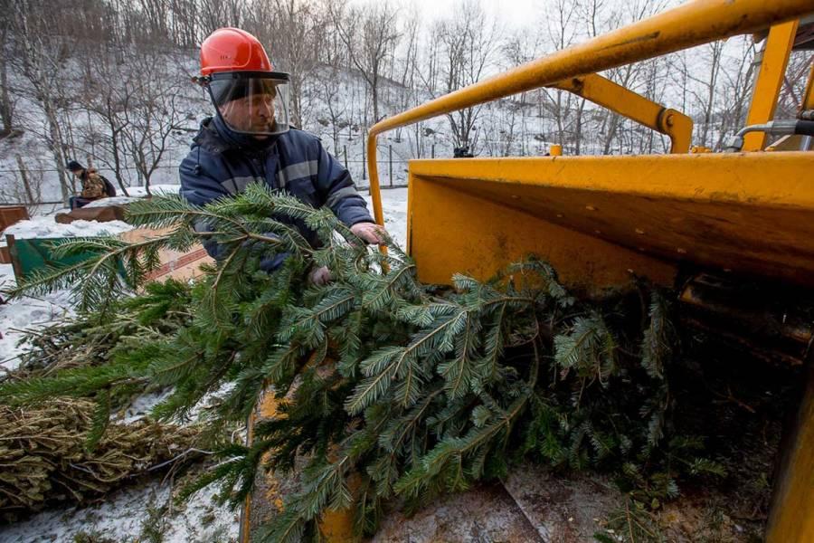 Де у Вінниці можна здати новорічну ялинку на утилізацію