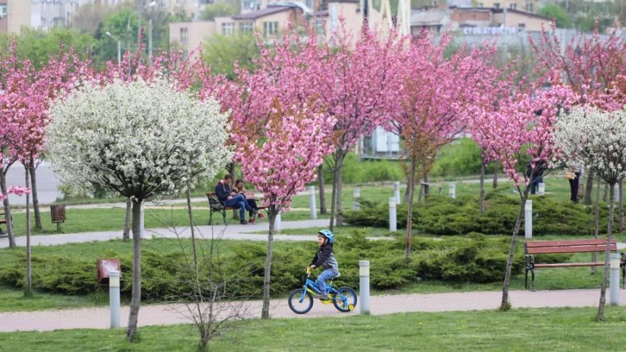 Де у Львові квітне сакура: ТОП-3 найпопулярніших локацій