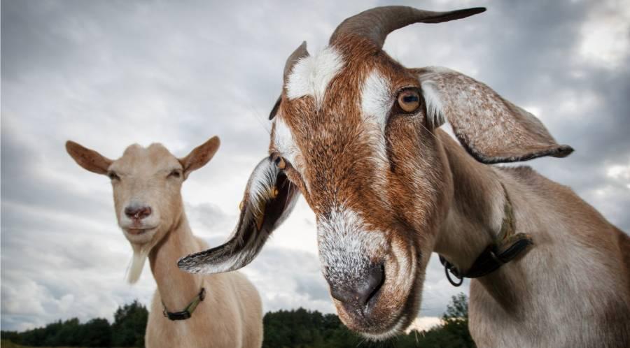 11 цікавих ферм для сімейних екскурсій та гастротуризму