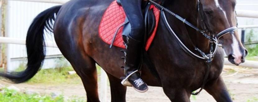 Навчання катанню верхи для дітей та дорослих в конному клубі «Кенінг»