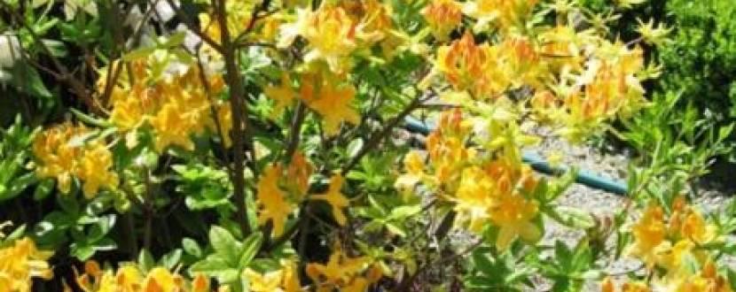 День відкритих дверей у Ботанічному саду