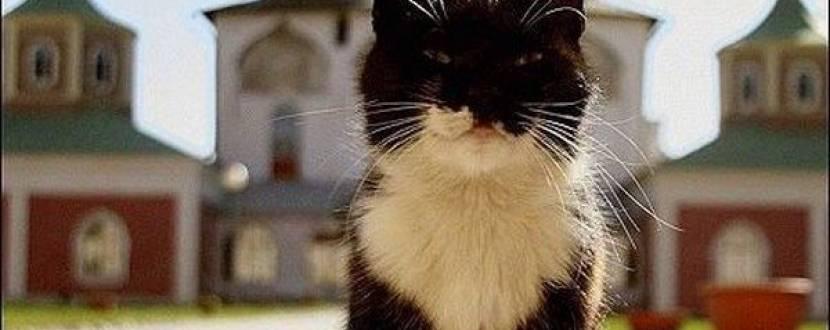Ярмарок на підтримку притулку для бездомних котів на Арт-заводі «Платформа»