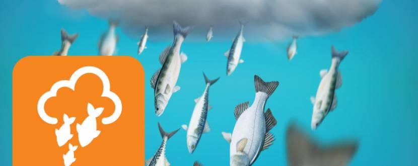 Рибний четвер. Знижки