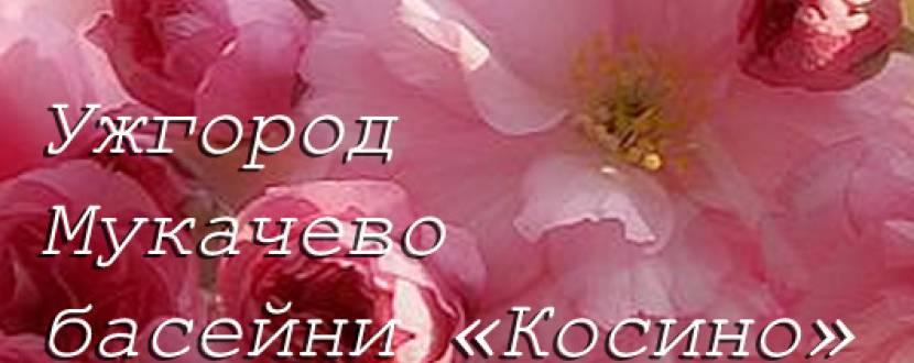 Закарпатська насолода (цвітіння сакур)