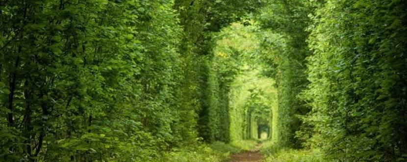 Лісова казка кохання-Волинь!