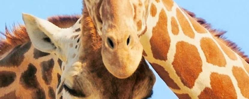 Київський зоопарк запрошує маленьких киян на свято морозива