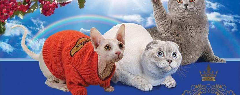 Міжнародна виставка-бал котів в Українському домі
