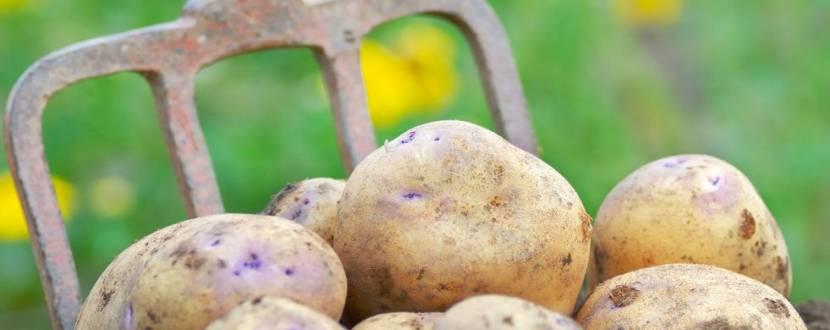 """""""Картопляне свято"""" у Рівненському зоопарку"""