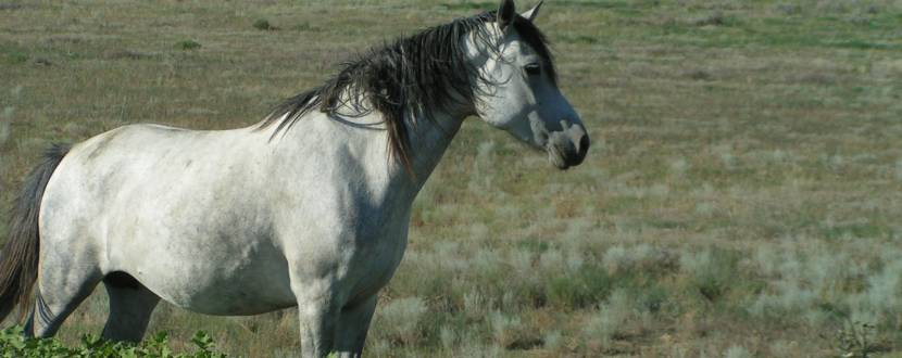 Свято українського коня