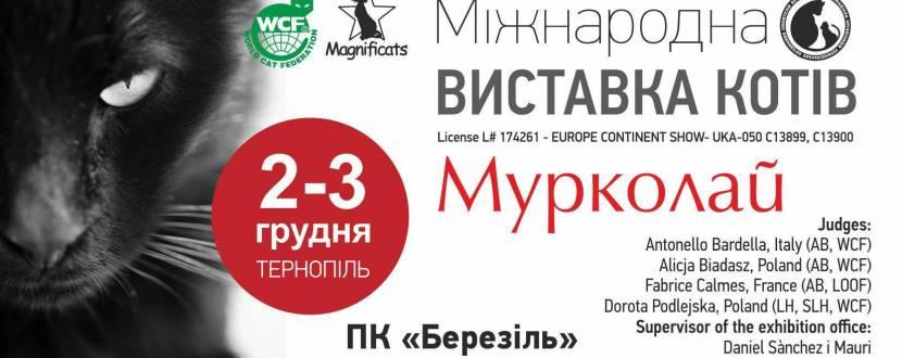 """Міжнародна виставка котів """"Мурколай"""" в м.Тернопіль"""
