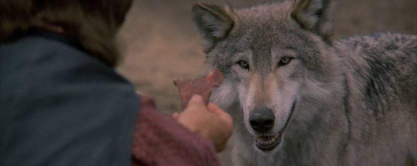 """Психологічна гра """"Танцююча з вовками"""""""