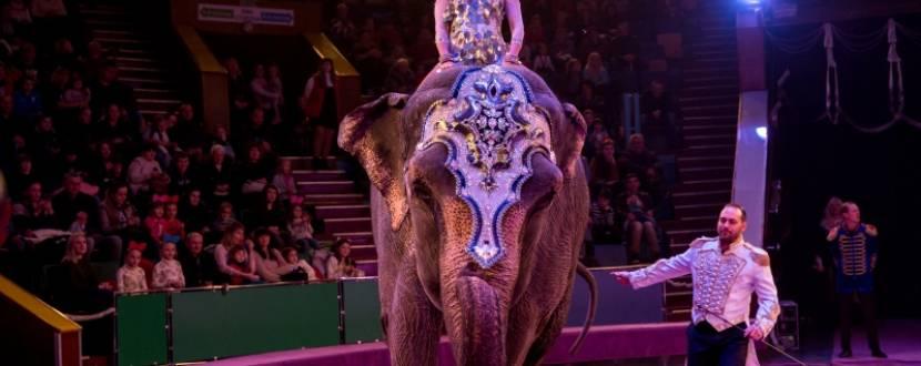 Слон і смугастий рейс - циркове шоу