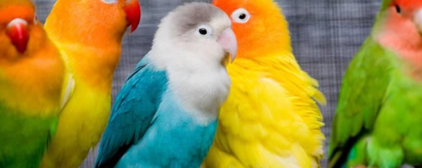 TropicPets - Виставка птахів і терраріумних тварин