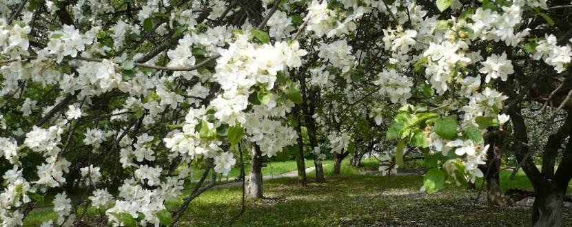 Виставка  «Весняний сад 2018»