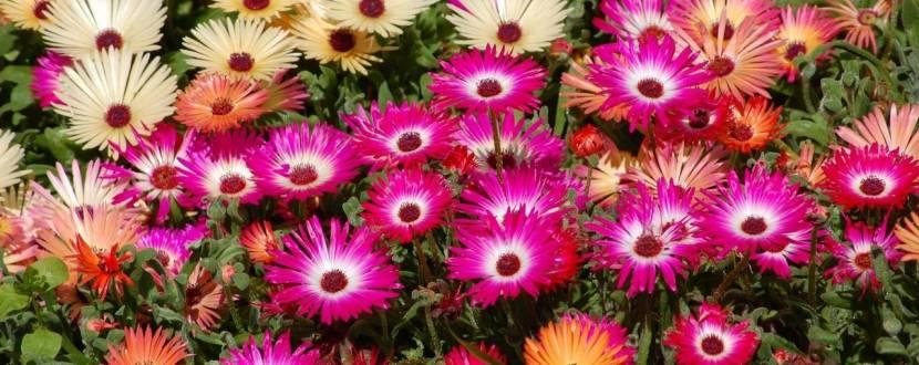"""Міжрегіональна спеціалізована виставка-ярмарок """"Магія квітів"""""""
