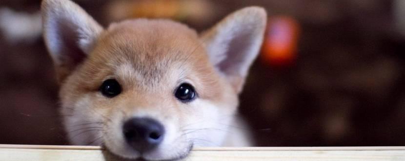 Перша виставка домашніх безпородних собак «Мокрий ніс - 2018»