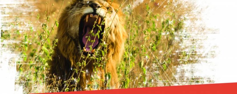 WILD TALKS - Розмова про зйомку дикої природи
