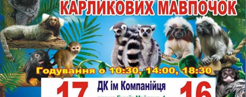 Виставка карликових мавпочок у Кропивницькому