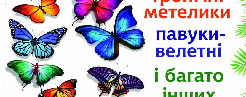 Виставка живих тропічних метеликів