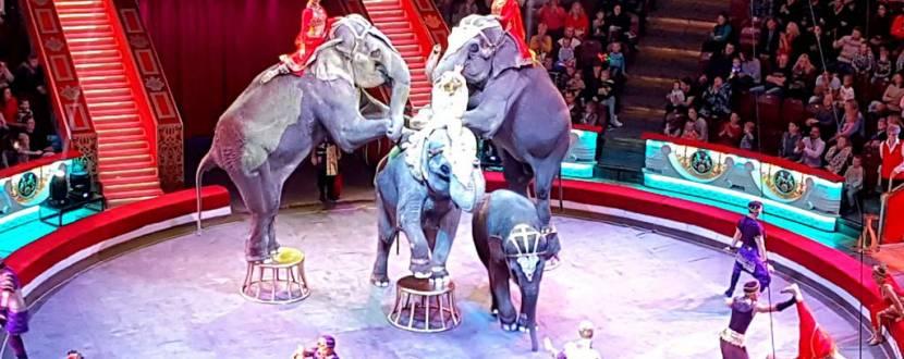 Цирк со слонами выступает в Виннице