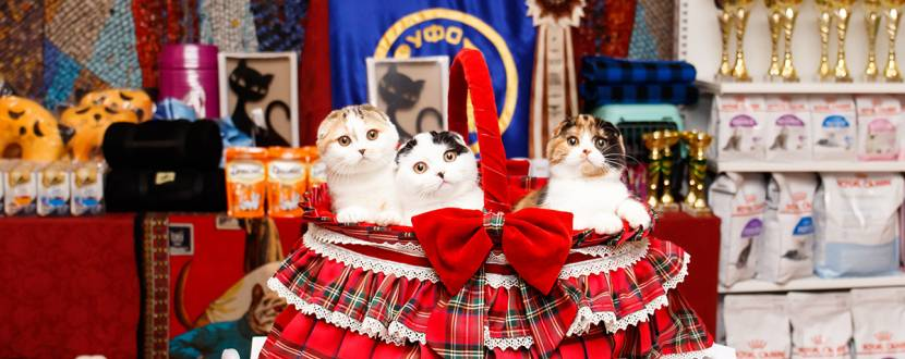 Львів Cat Fest 2020 - Міжнародна виставка котів