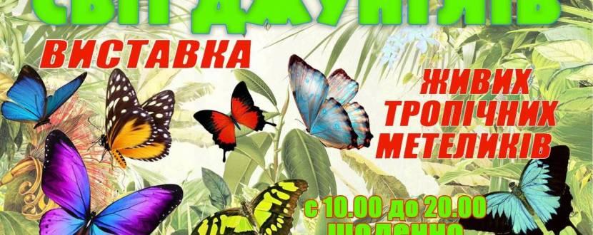 Виставка живих тропічних метеликів у Хмельницькому. Розіграш квитків