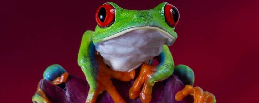 """Виставка """"Світ жаб"""""""