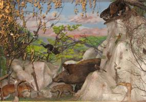 Виставки Хмельницького обласного краєзнавчого музею