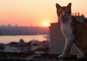Королівство котів - документальний фільм