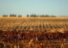 Як безоплатно отримати земельну ділянку в Україні - зустріч