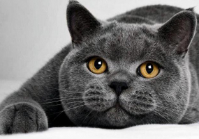 Міжнародна виставка котів - Цвіт Папороті