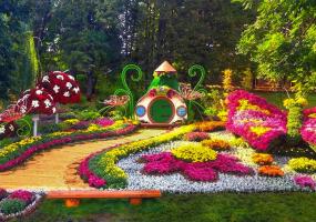 Фестиваль хризантем на Співочому полі