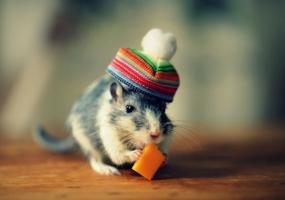 Сказка «Все мыши любят сыр»