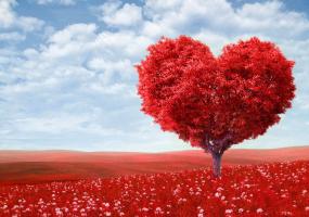 Музика сердець - Святкова шоу-програма