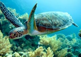 Виставка черепах з усього світу