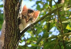 Благодійна акція  Березневе свято котів