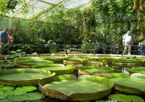 Екскурсії та прогулянки Ботанічним садом ім. Гришка