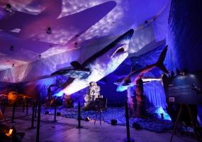 Динозаври морських глибин - Виставка на ВДНГ