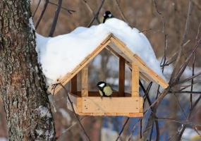 Нагодуй птахів взимку - Акція у Києві