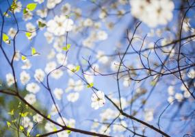 Весняна класика - Концерт