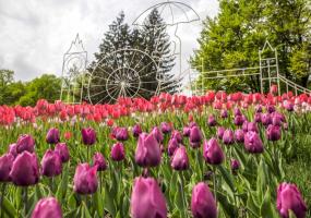 Фестиваль тюльпанів у Києві