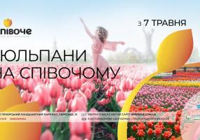 Виставка тюльпанів на Співочому полі