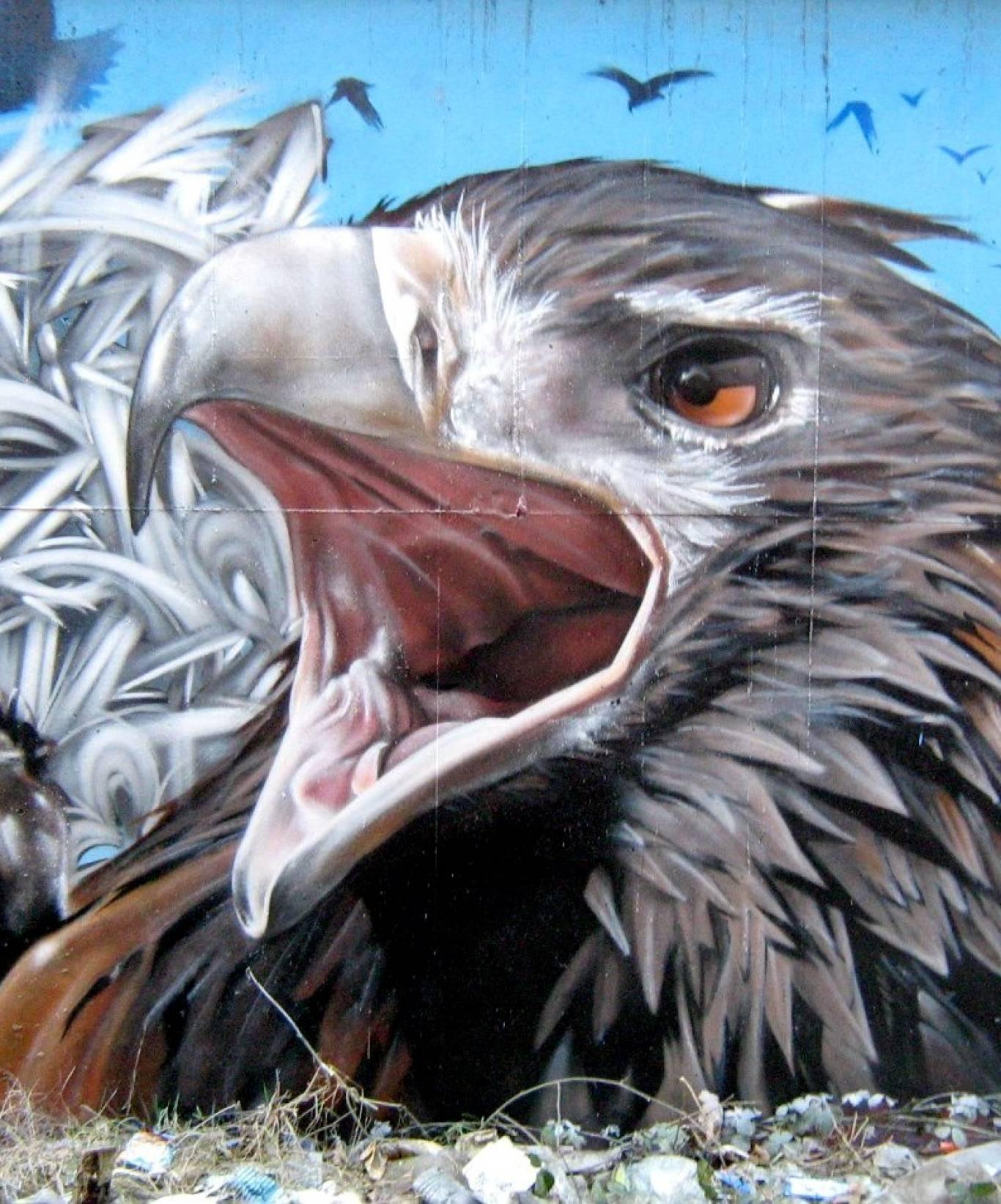 Конкурс графіті для Вінницького зоопарку