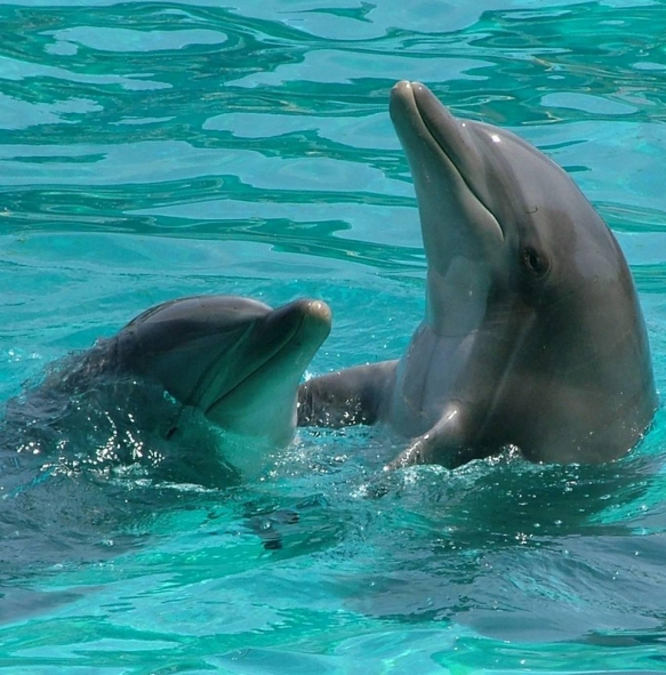 """Унікальний виїзний семінар """"На одній хвилі з дельфінами"""""""