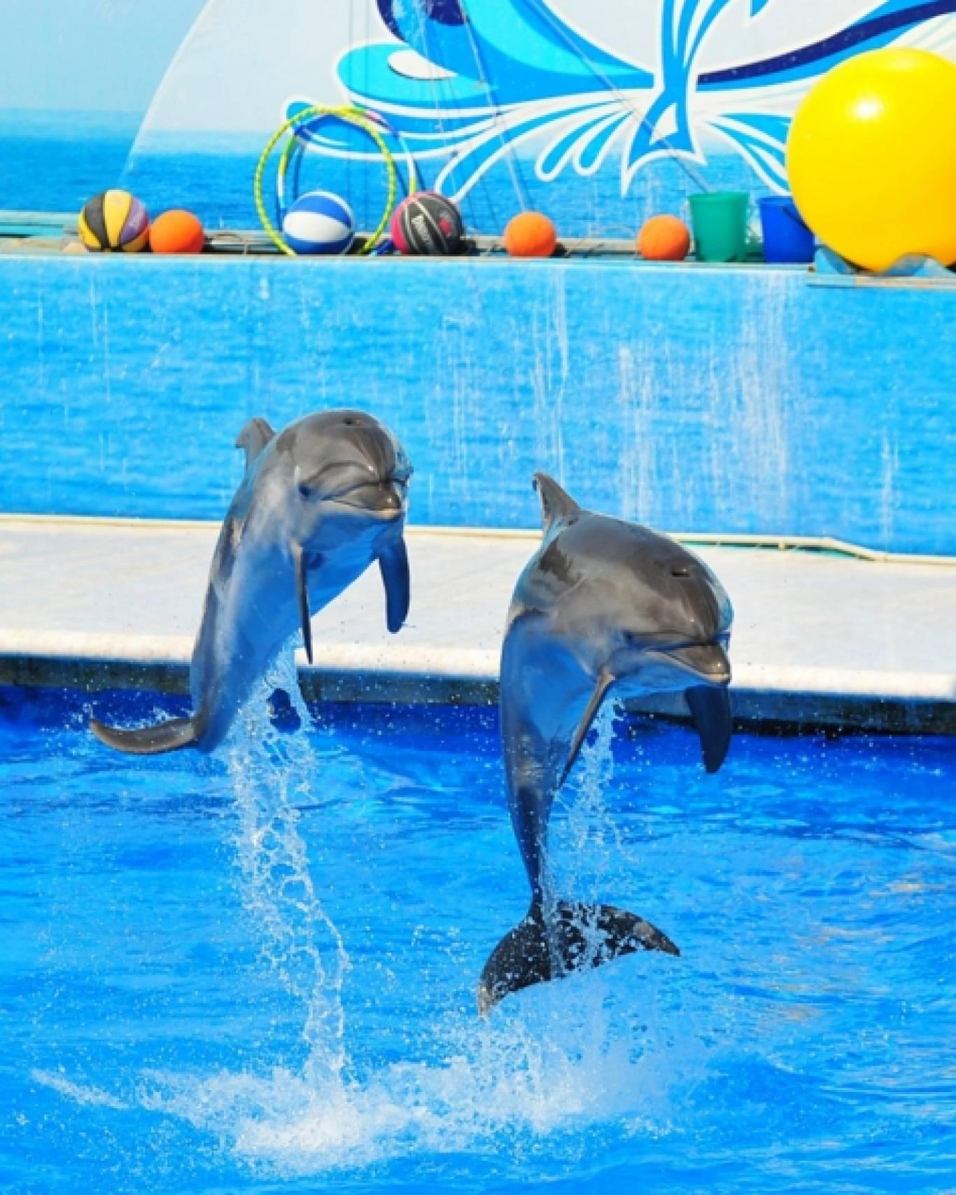 Дельфінарій на 8 березня!