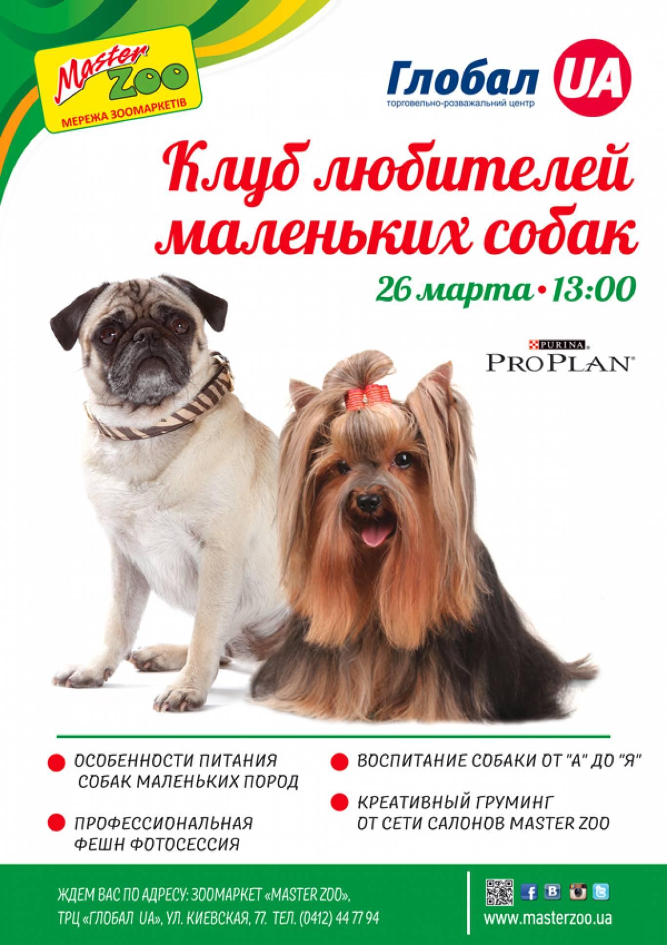 Зустріч власників маленьких собак