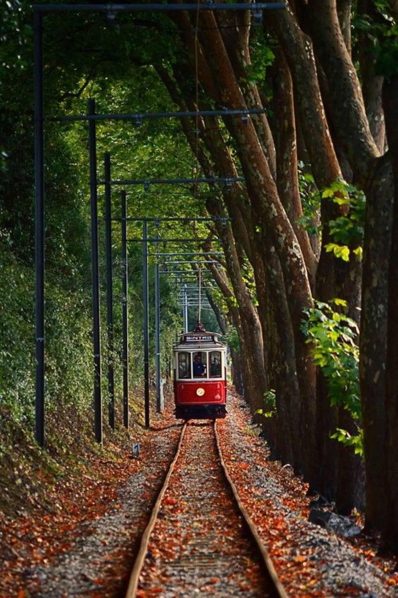 """Екскурсія для дітей та батьків """"Містичний трамвай + фаєршоу"""""""
