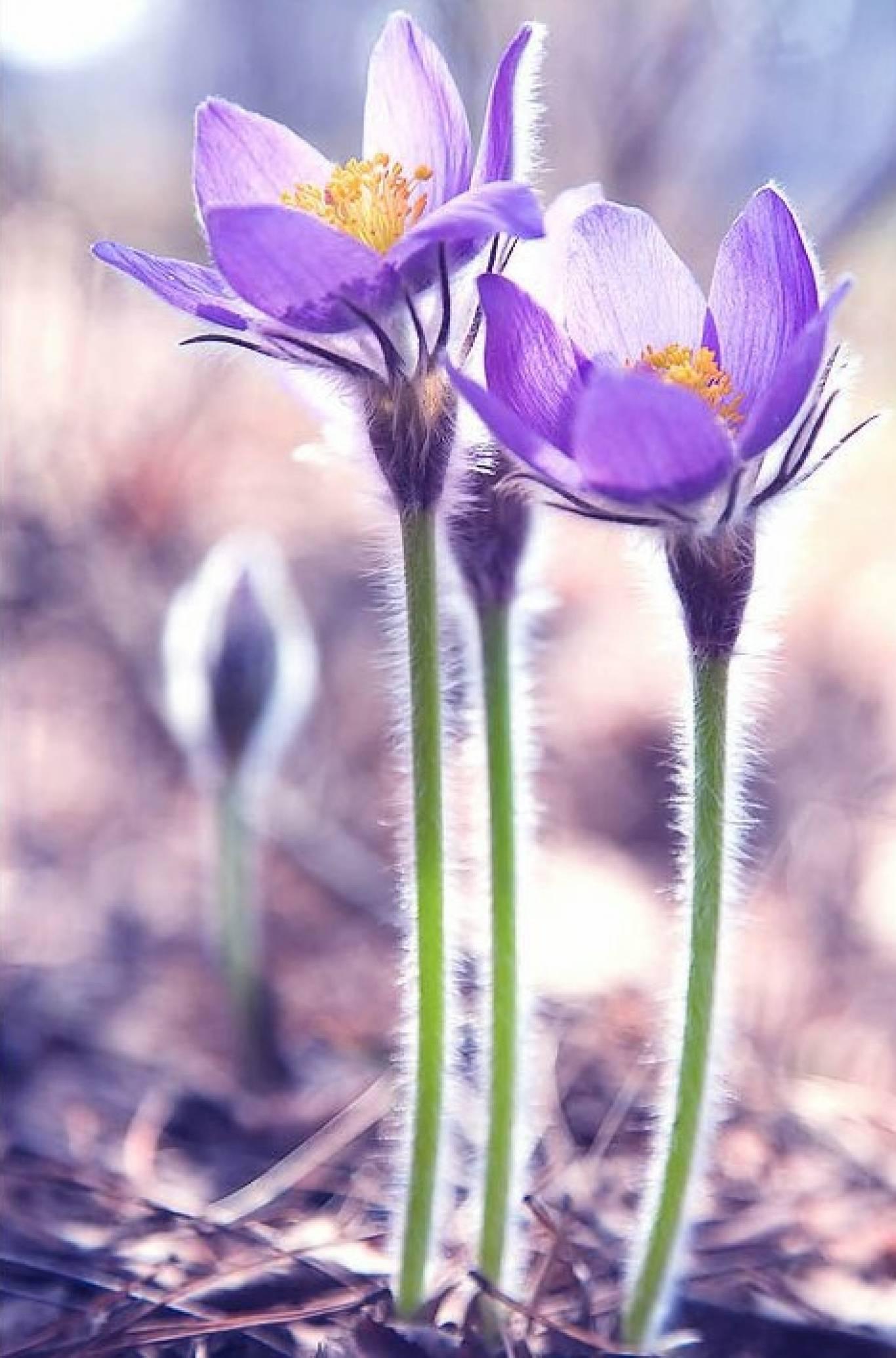 """День відкритих дверей у Ботанічному саду """"Магія весни"""""""