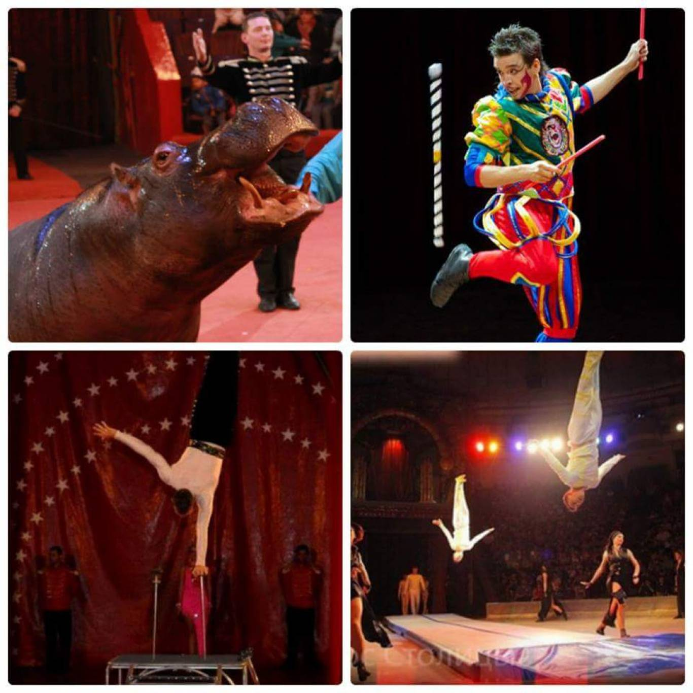 Вистави Grand Circus Budapest