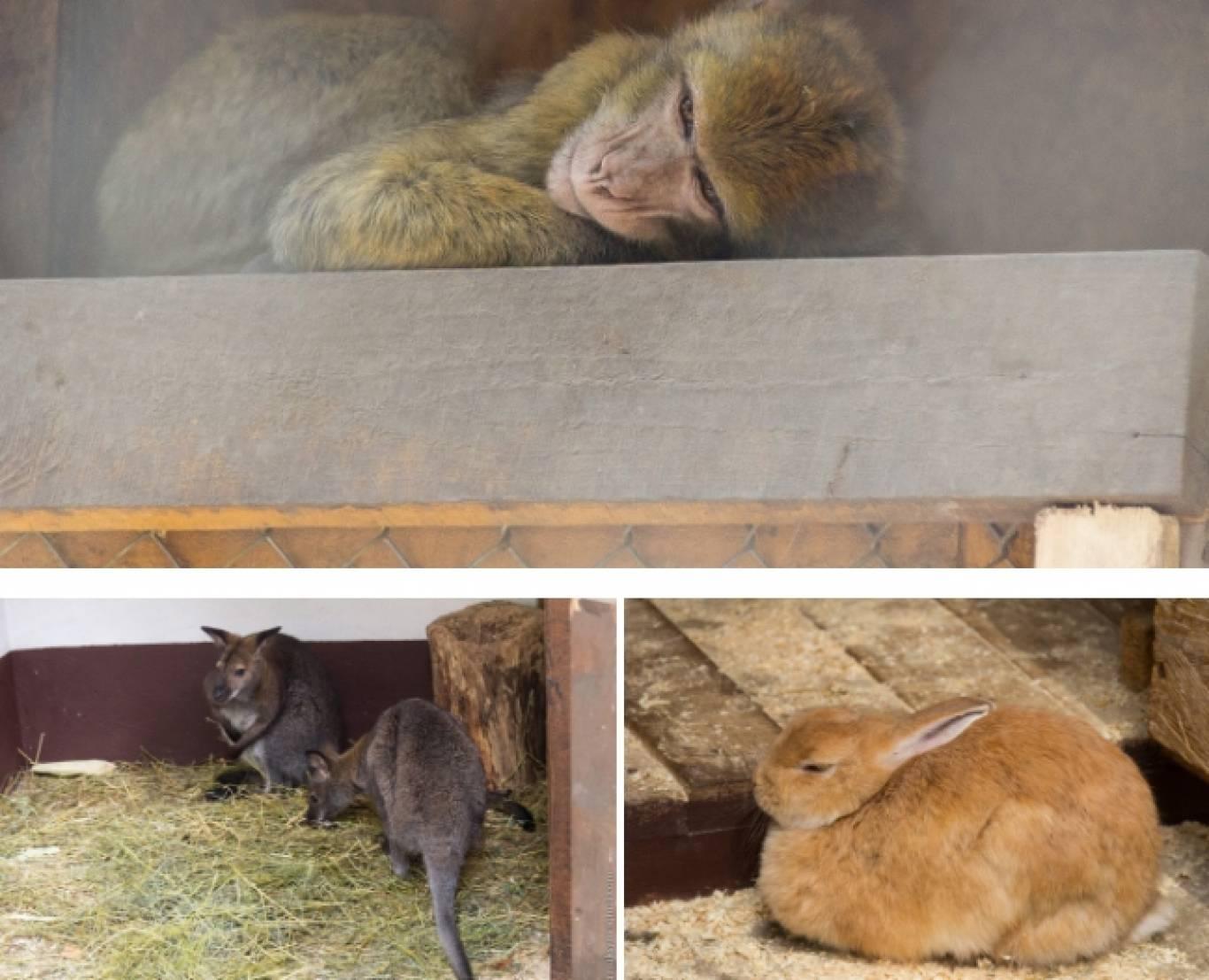 Розваги у Вінницькому зоо-дворику